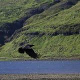 Sväva som är korpsvart i en isländsk dal Arkivbild