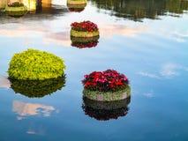 Sväva växter fotografering för bildbyråer