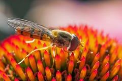 Svävande-fluga matning Arkivfoto