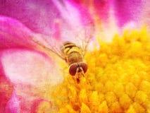Svävandefluga på en dahlia Royaltyfri Foto