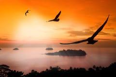 svävandeseagull Royaltyfri Foto