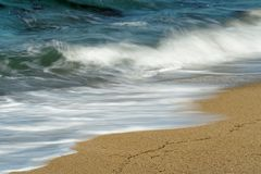 Sv?lla p? stranden i detaljsikt royaltyfri foto