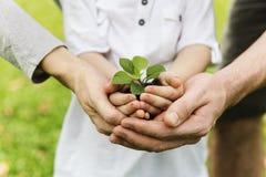 Svago crescente di giardinaggio della pianta del bambino fotografia stock