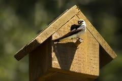 Svala på fågelhus Royaltyfri Foto