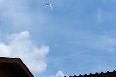 svala som flyger över den blåa himlen Arkivbilder