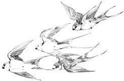 svala Svalablyertspennan skissar snabbt flyg Hälsningar fjädrar vektor illustrationer