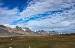 Svalbard de zomermening royalty-vrije stock fotografie