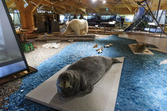 Svalbard Museum, Longyearbyena, Svalbard, Noorwegen Stock Foto's