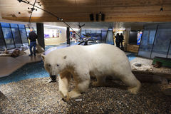 Svalbard-Museum, Longyearbyena, Svalbard, Norwegen Lizenzfreie Stockfotos