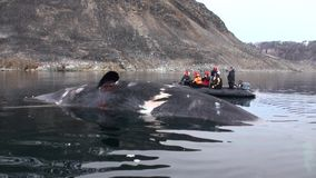 People in boat near the big whale lies dead in water of Arctic.