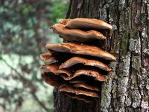 Svamp på en tree royaltyfri foto