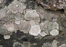 svamp rock royaltyfri foto