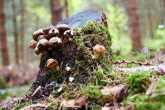 Svamp som växer på ett träd i trät arkivfoto