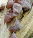 svamp tree Fotografering för Bildbyråer
