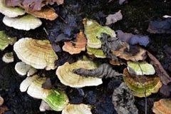 svampar Royaltyfri Fotografi