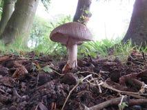 svampar Arkivfoton