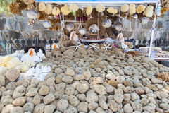 svampar Arkivbild