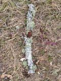 svampar Royaltyfria Foton