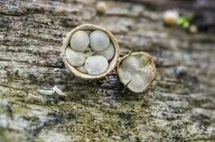 svampar Royaltyfri Bild