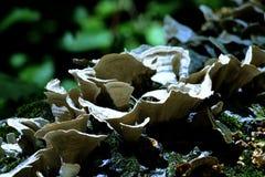 svampar Fotografering för Bildbyråer