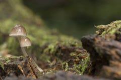 Svampar i skogsmarken på den Southampton allmänningen royaltyfri fotografi
