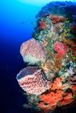 Svampar och mjuka koraller på en tropisk rev Arkivbild