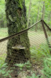 svampen på trädet Arkivbilder