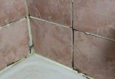 Svampen som växer på tegelplattan, fogar ihop badrumvägghörnet Royaltyfria Foton