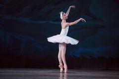 Svan för vit för Prima ballerina Arkivfoto
