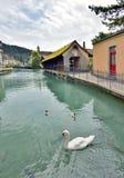Svan i den Thun staden och floden i Aare Arkivbild