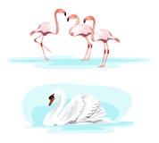 Svan och flamingo royaltyfri illustrationer