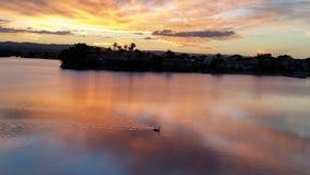 Svan på sjön på solnedgången Arkivfoton