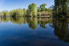 Svan sjö Iris Gardens, Sumter, SC Royaltyfria Bilder