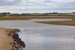 Svan sjö på Phillip Island, Victoria, Australien Arkivbild