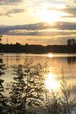 Svanar av solnedgången Fotografering för Bildbyråer