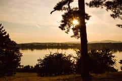 Svanar av solnedgången Royaltyfri Foto