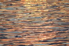 Svanar av solnedgången Arkivfoton