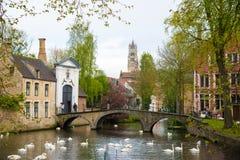 Svanar i sjön av förälskelse i Bruges, kanalpanoramautsikt nära Begijnhof royaltyfri foto