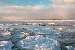 Svanar i Toronto Cherry Beach under vinter Royaltyfria Bilder