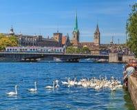 Svanar och folk på sjön Zurich i sommar Royaltyfria Foton