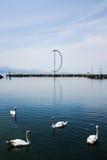 Svanar på Lausanne fotografering för bildbyråer
