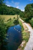 Svanar på Montgomery Canal i Wales, UK royaltyfri foto
