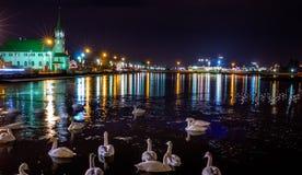 Svanar på sjön på natten royaltyfri bild