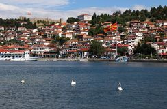 Svanar simmar på sjön Ohrid royaltyfri bild