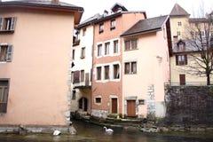 Svanar som simmar i den Thiou floden i centrum för Annecy, Frankrike ` s Royaltyfria Foton