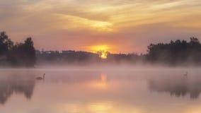 Svanar som vilar på sjön på gryning Fotografering för Bildbyråer