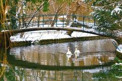 Svanar under bron royaltyfria bilder
