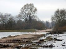 Svanar, väg i flodtid och träd, Litauen royaltyfria foton