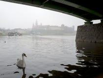 Svanen är under bron i den dimmiga Krakowen Royaltyfri Foto