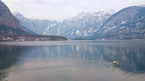 Svanen på Hallstattersee sjön, Hallstatt, Österrike lager videofilmer